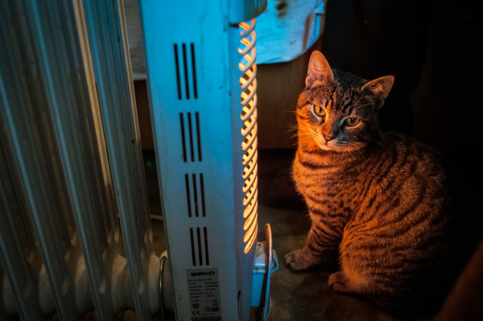 Art and Documentary Photography - Loading 05.-A-cat-sits-near-the-heater-to-warm-up-in-a-wind-draft-inside-the-room.jpg