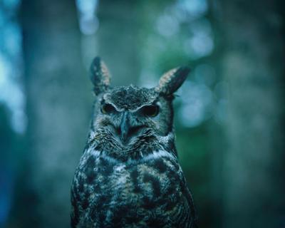 Gus (My Grandmother's Owl), Alaska, 2013