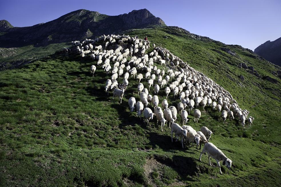 Art and Documentary Photography - Loading Shepherds 02.jpg