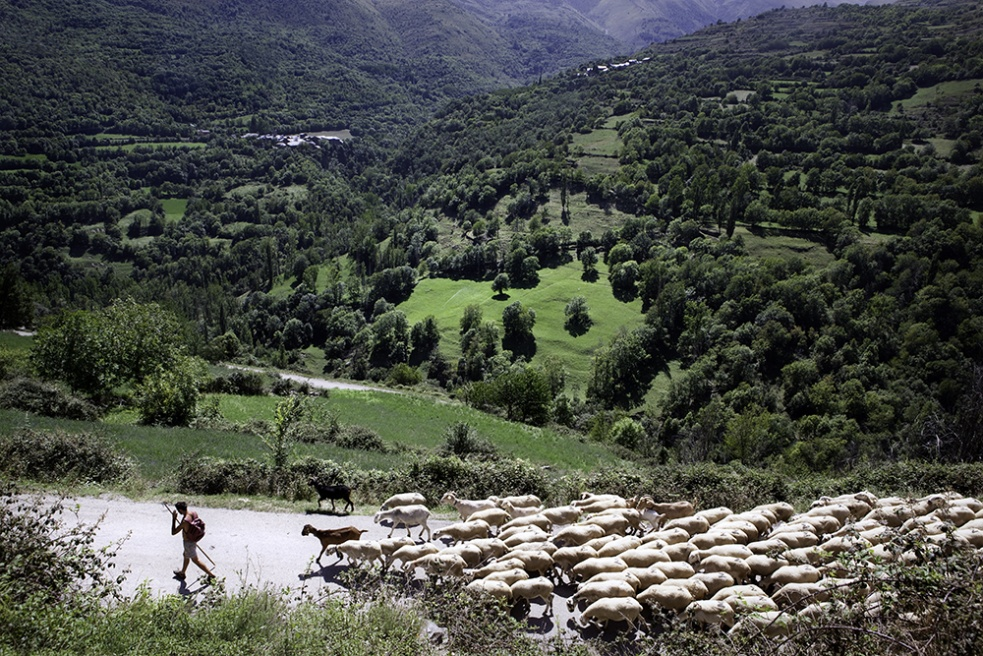 Art and Documentary Photography - Loading Shepherds 07.jpg