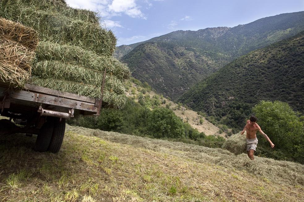 Art and Documentary Photography - Loading Shepherds 09.jpg