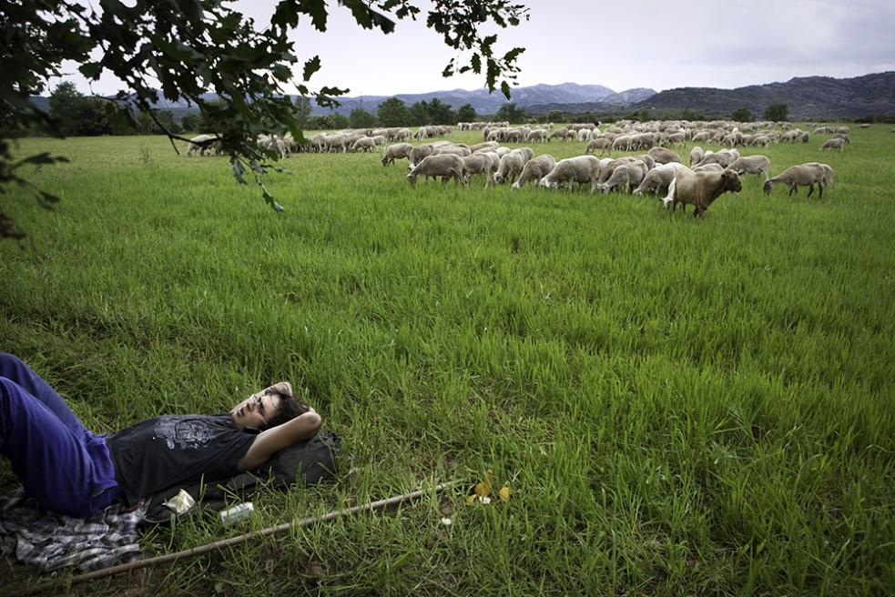 Art and Documentary Photography - Loading Shepherds 11.jpg