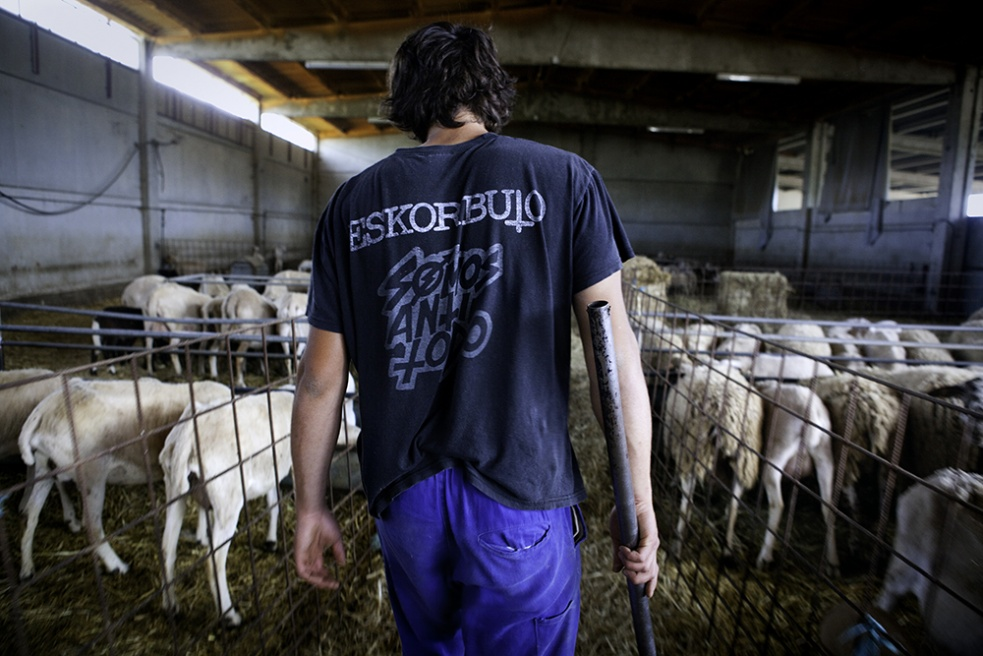 Art and Documentary Photography - Loading Shepherds 14.jpg