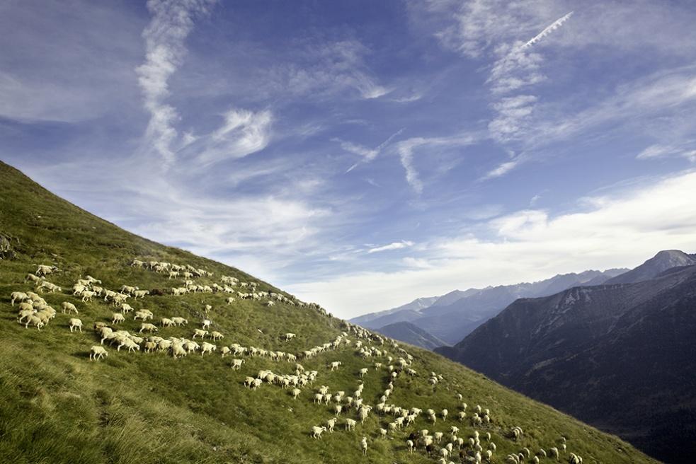 Art and Documentary Photography - Loading Shepherds 16.jpg