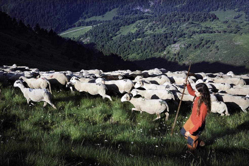Art and Documentary Photography - Loading Shepherds 17.jpg