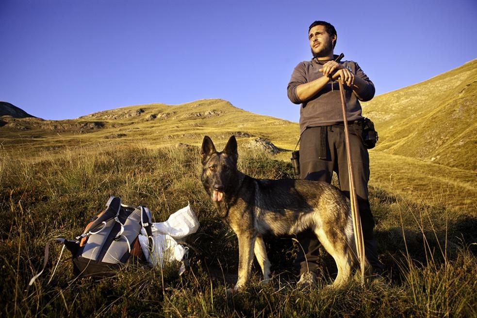 Art and Documentary Photography - Loading Shepherds 19.jpg