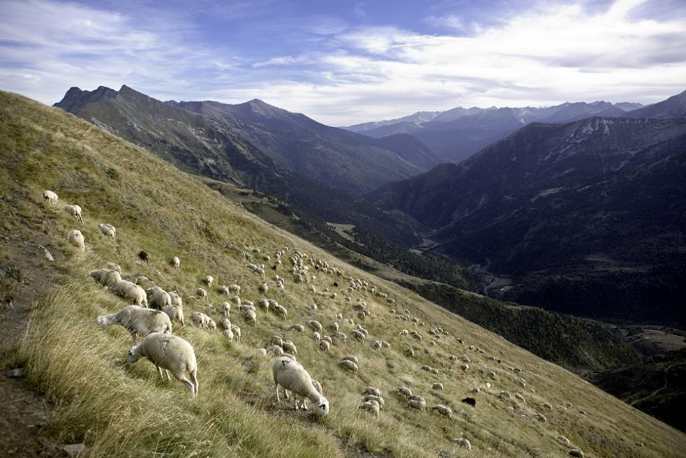 Art and Documentary Photography - Loading Shepherds 20.jpg