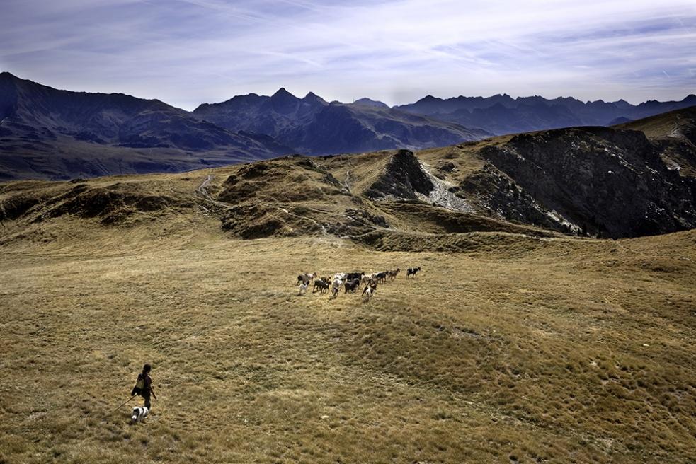 Art and Documentary Photography - Loading Shepherds 24.jpg