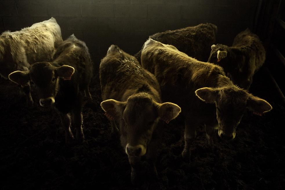 Art and Documentary Photography - Loading Shepherds 31.jpg