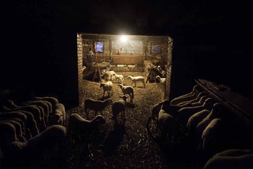 Art and Documentary Photography - Loading Shepherds 32.jpg