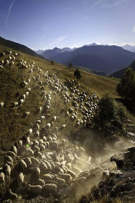 Art and Documentary Photography - Loading Shepherds 25.jpg