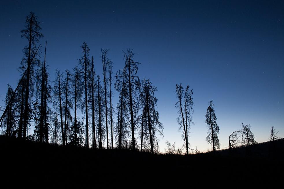 Art and Documentary Photography - Loading 010_Monastra_pine_trees_Colorado copy.jpg