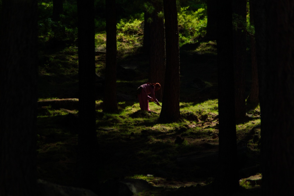 Art and Documentary Photography - Loading Raking the Forest Floor.jpg