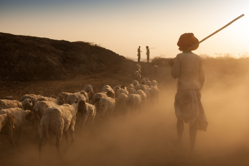 Art and Documentary Photography - Loading Shepards and Flock Reurn Home.jpg