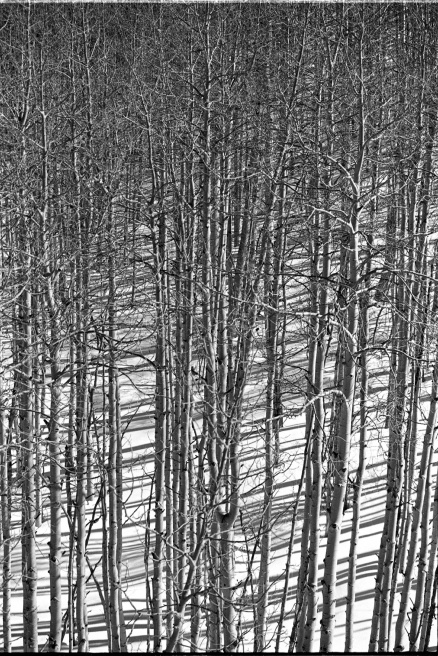Art and Documentary Photography - Loading aspens in motion.jpg