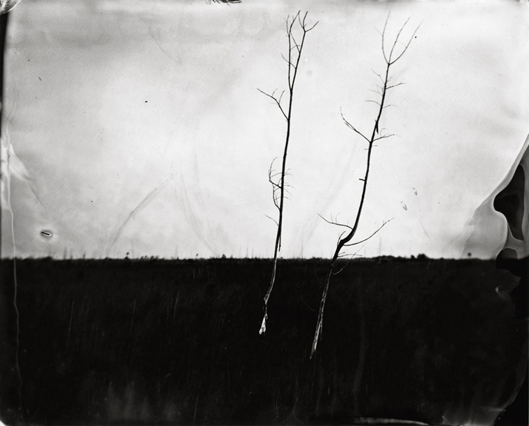 Two Trees in Sawgrass, 2010