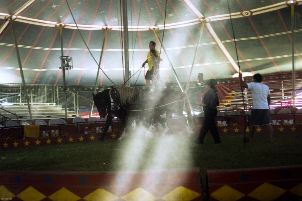 Art and Documentary Photography - Loading horse practice light.jpg