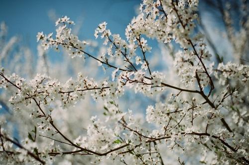 Flowers for Nadezhda
