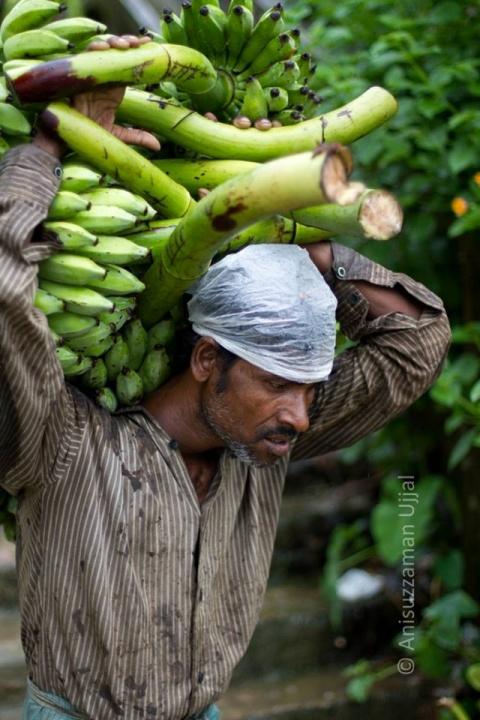 Banana Labour