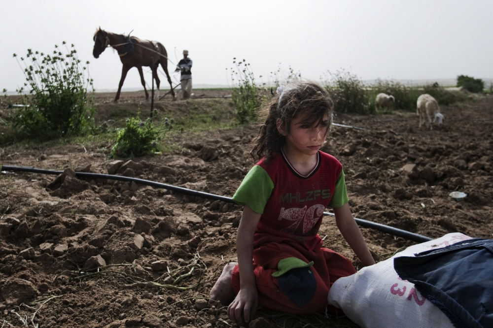 Photography image - Loading Gaza_LL_003.JPG