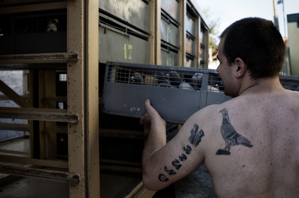 A pigeon breeder insert a cage full of pigeon in a truck that will drive the pigeons to the release location of a race