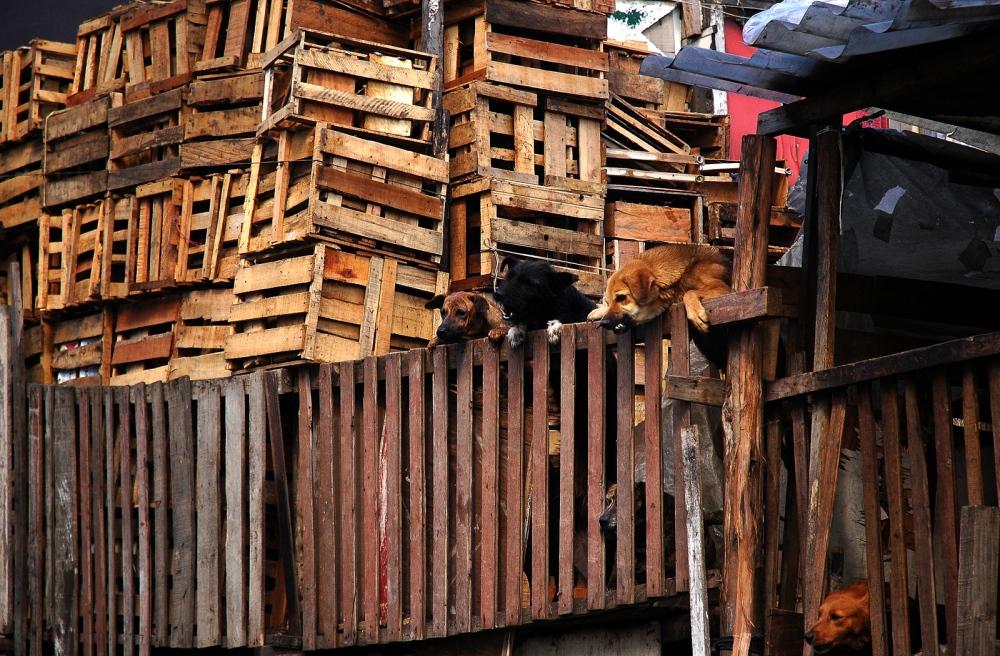 Bogota,Colombia, Marginal neighborhood where people use recycling as livelihood.