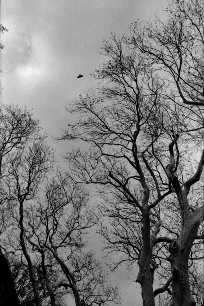 Art and Documentary Photography - Loading 009IMG_0032.jpg