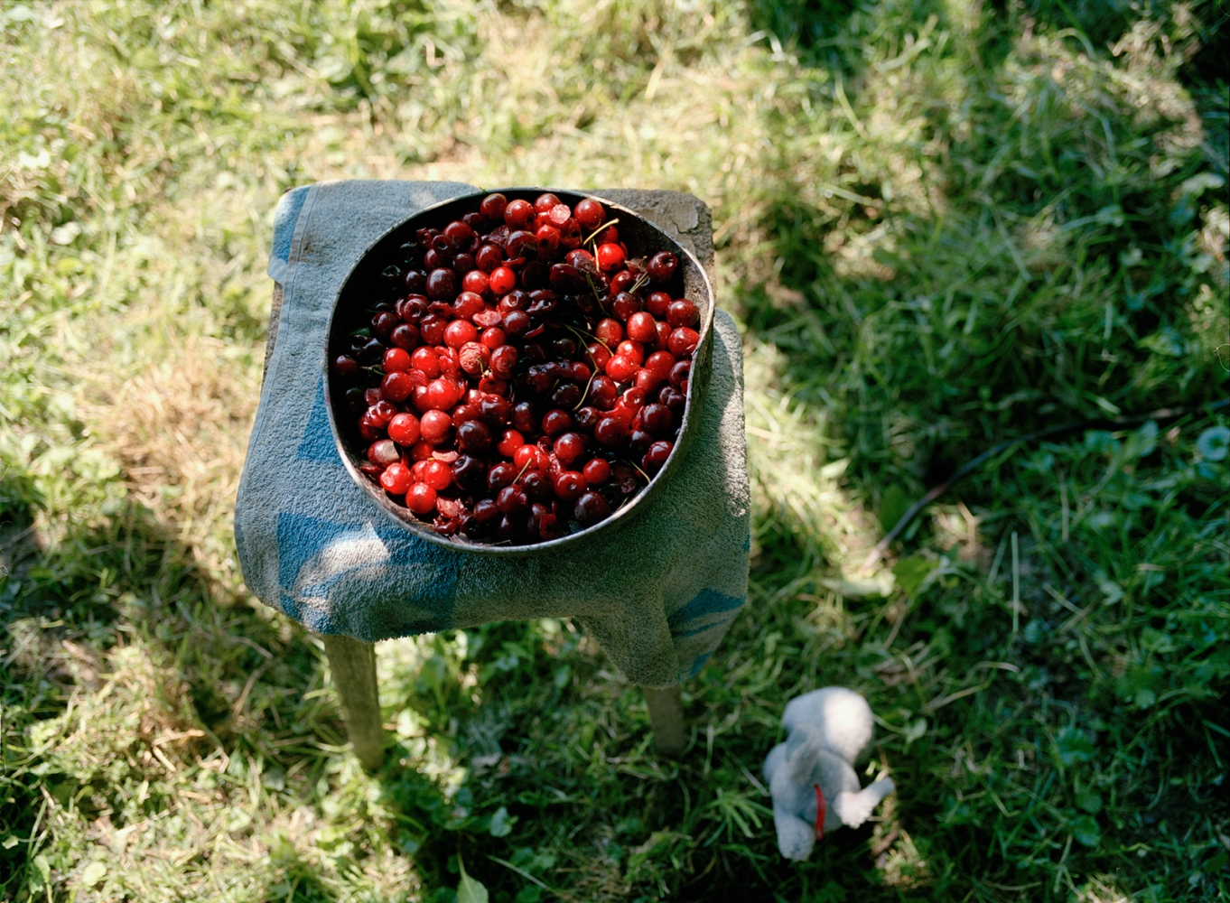 Art and Documentary Photography - Loading 10_cherries_elephant_small.jpg