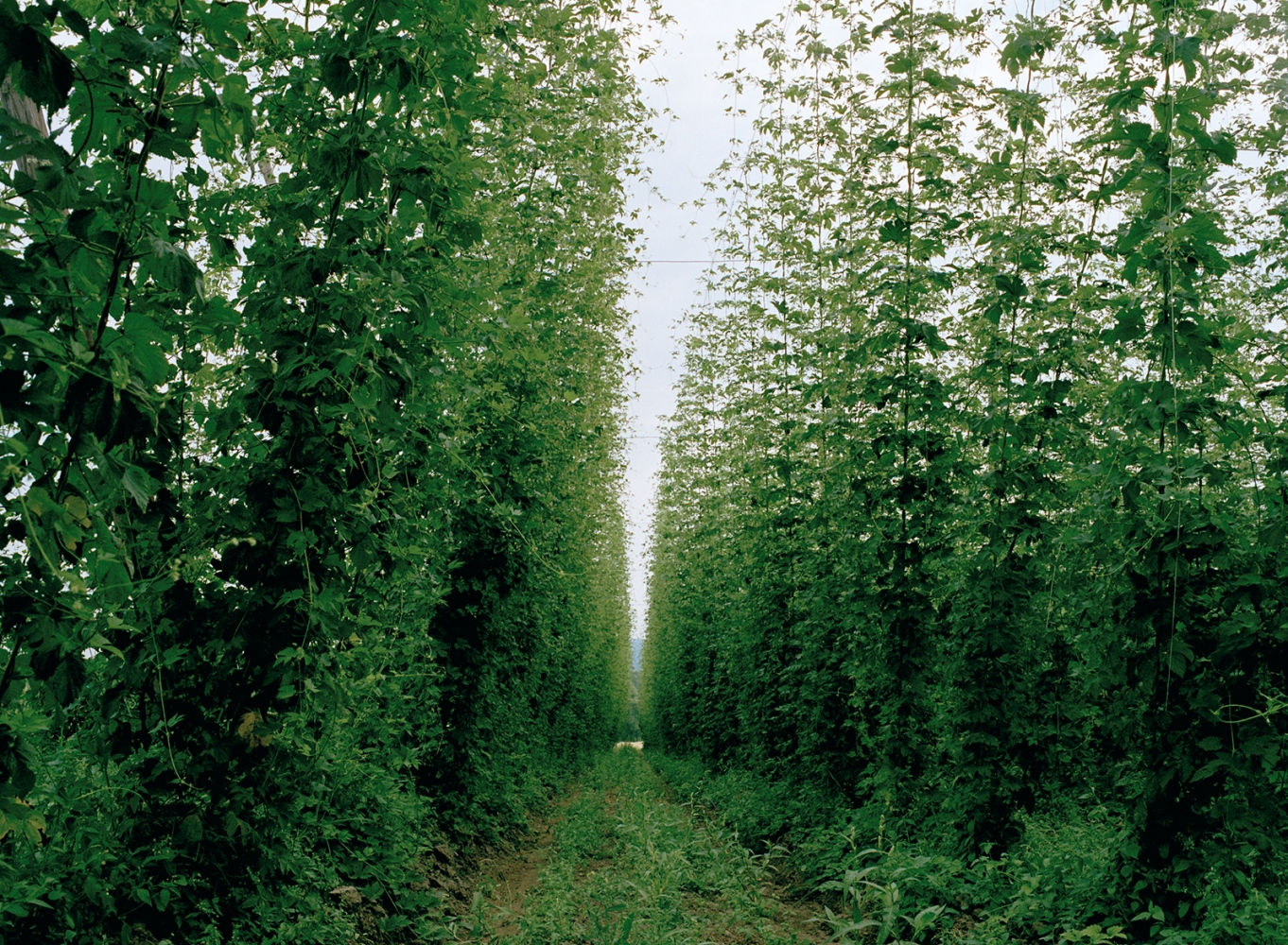 Art and Documentary Photography - Loading 14_hops.jpg