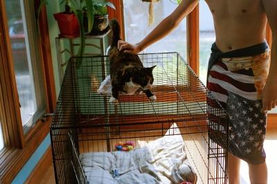 Matt petting pixie in his kitchen, Barrington, RI
