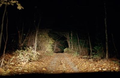 Kate's driveway, Rehoboth, MA