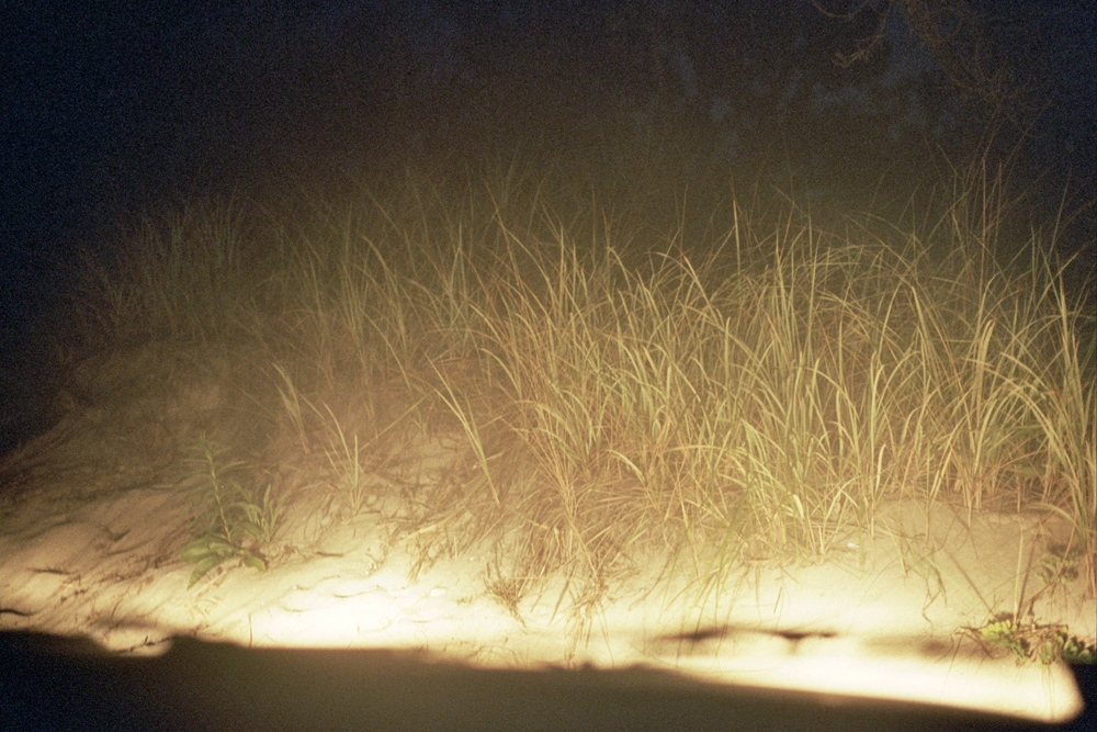Beach grass in the headlights, Southampton, NY