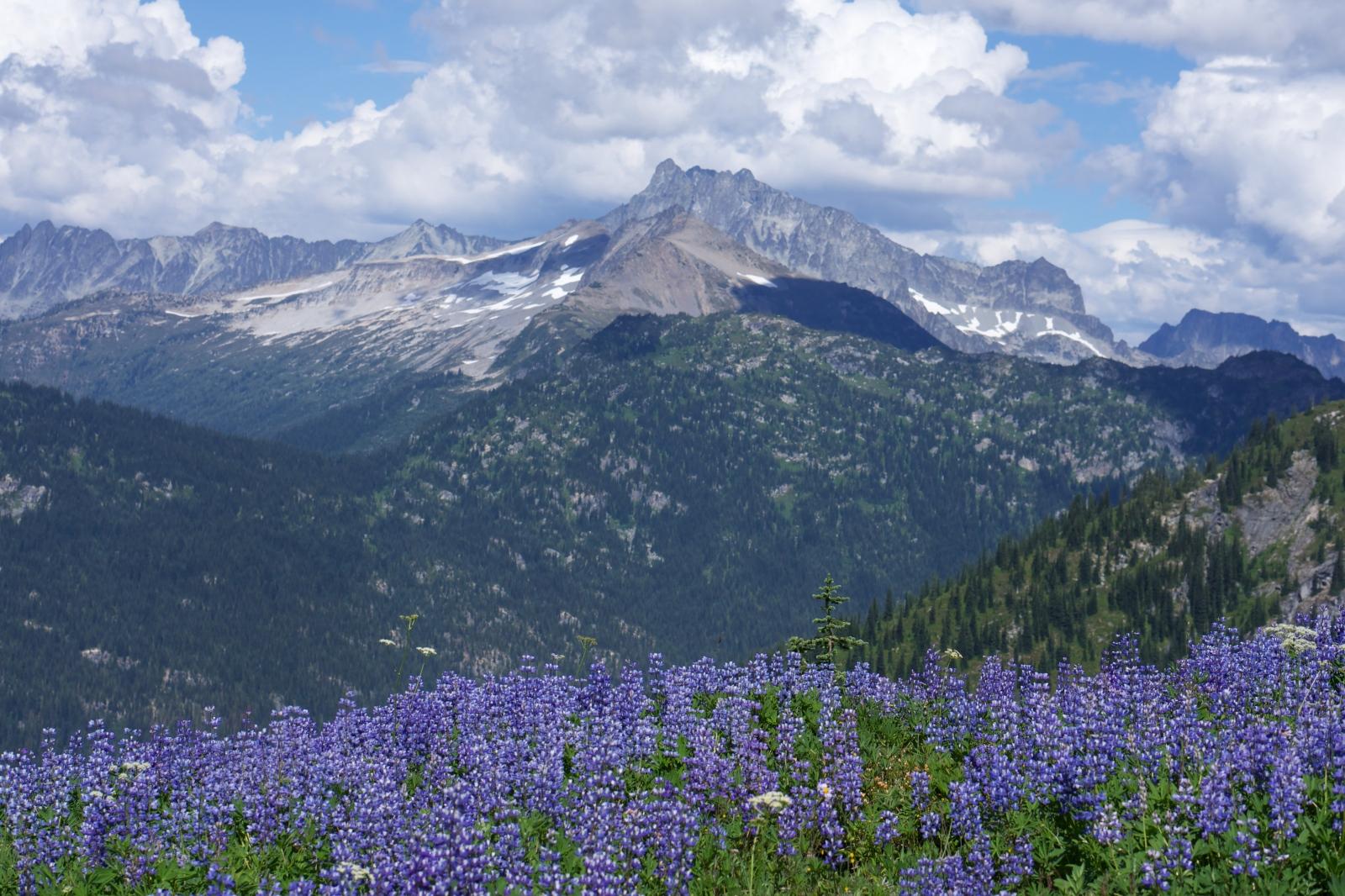 Art and Documentary Photography - Loading Rakesh-Glacier-Peak-Wilderness0046.jpg