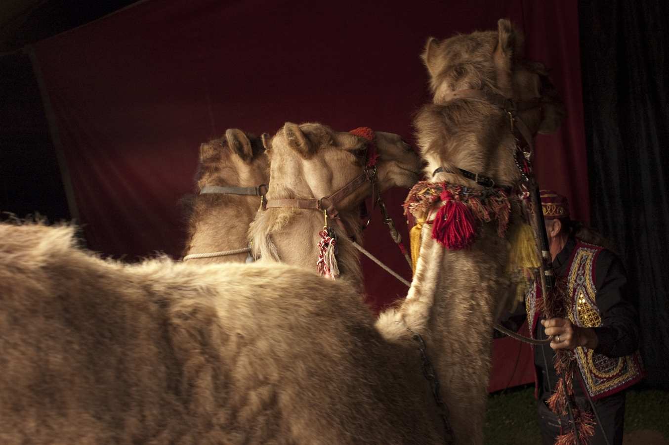 Art and Documentary Photography - Loading camels.jpg
