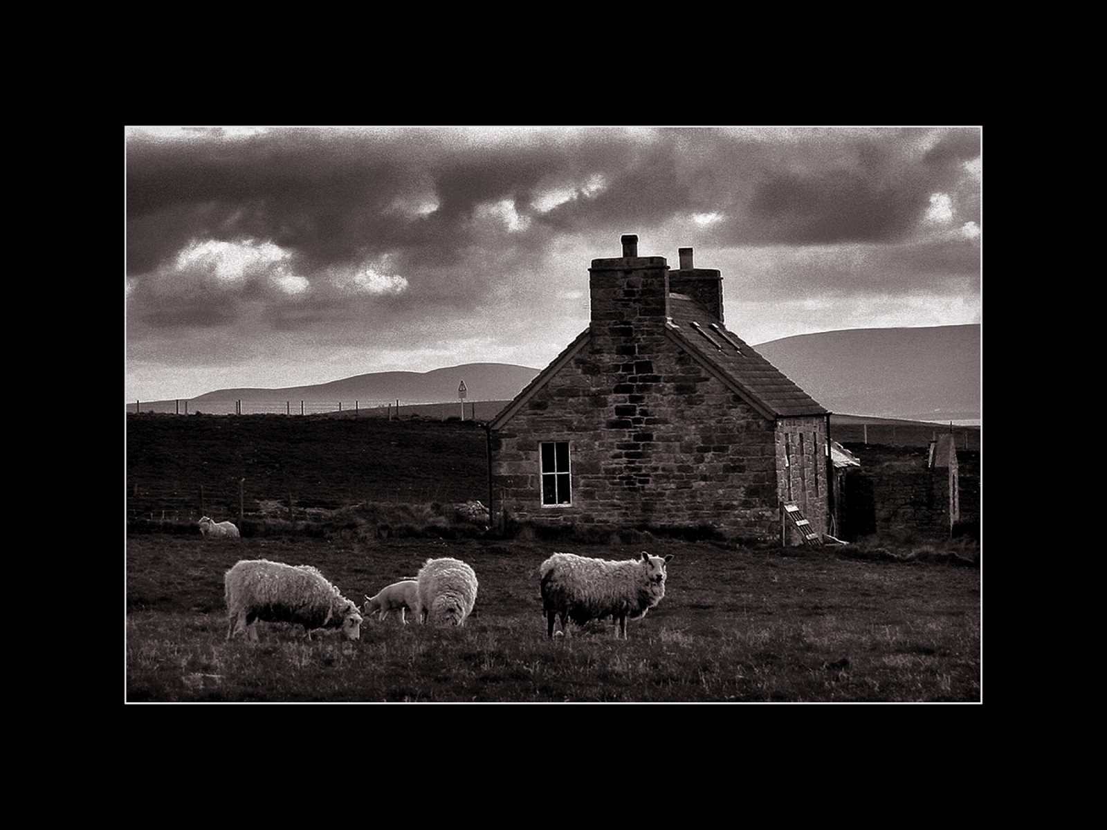 Art and Documentary Photography - Loading Orkney farm-cr br.jpg