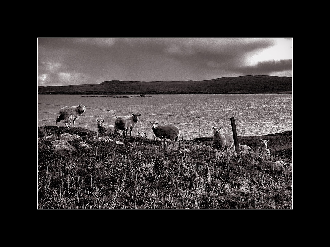 Art and Documentary Photography - Loading Shetland9 015 br.jpg
