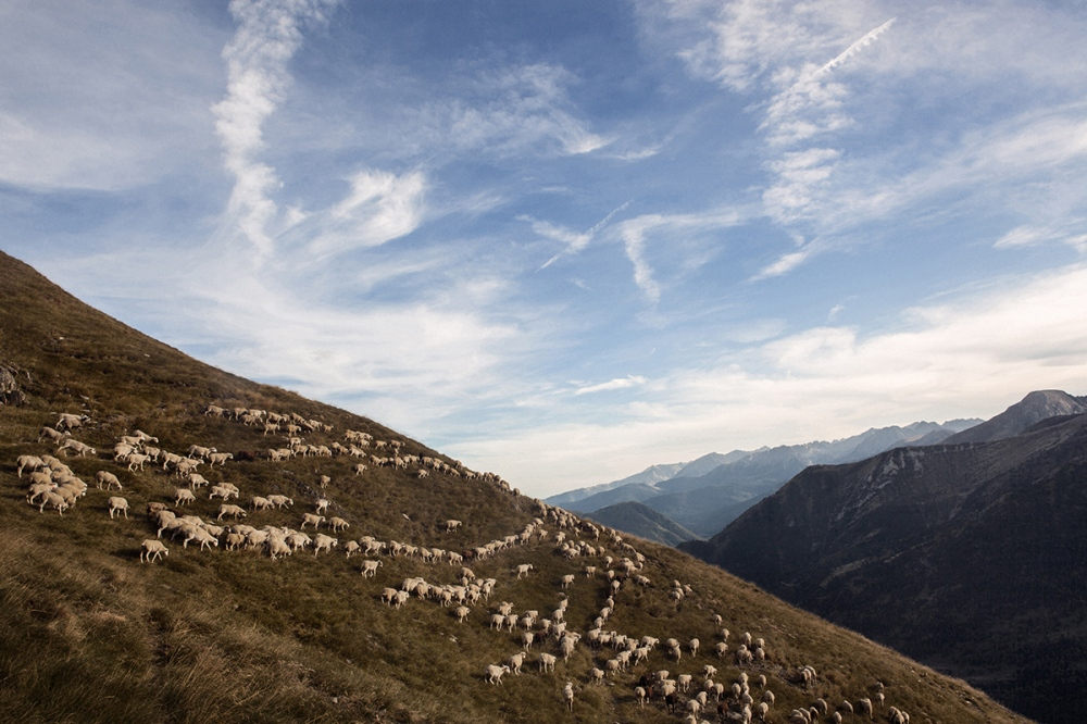 A group of sheeps in Salau mountains, in the Catalan Pyrenees.