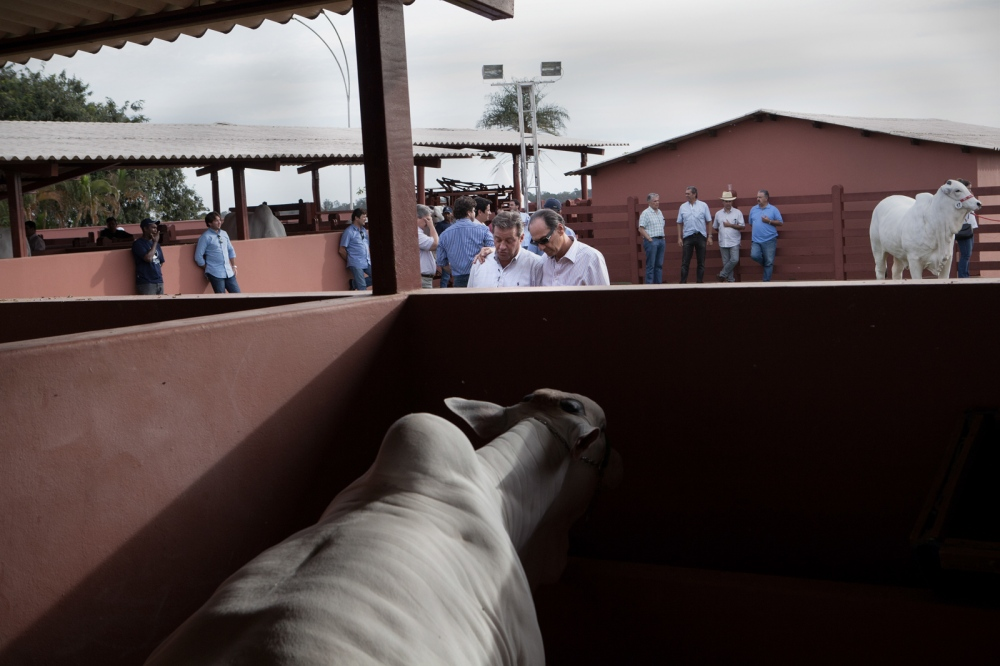Cattle breeders in a private luxury cattle auction during the most important cattle Fairs of the country, the Expozebu. Uberaba, Brazil, 2013.