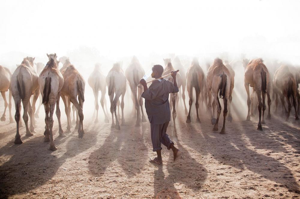 Photography image - Loading somaliland_12.jpg