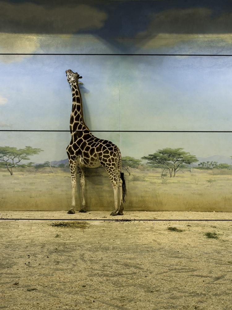 Giraff House, Bronx Zoo, NY 2013