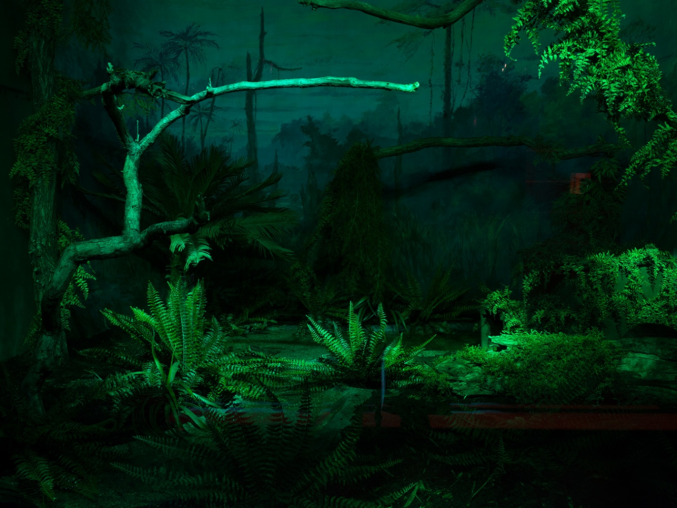 Nocturnal Bird Exhibit, Bronk Zoo, 2012
