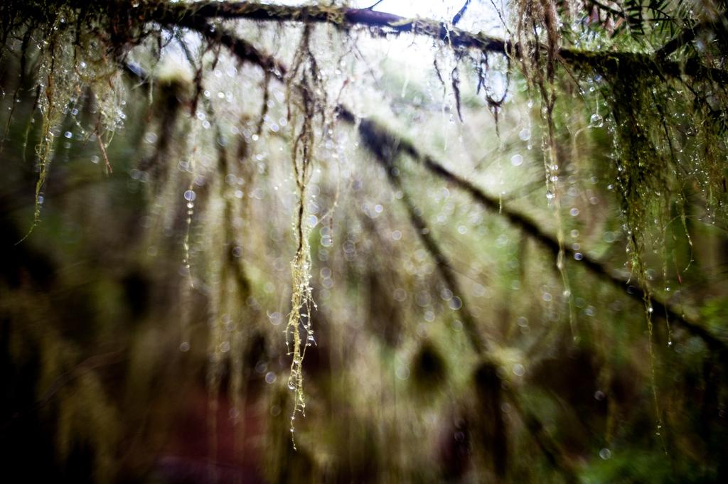 Art and Documentary Photography - Loading meierTeresa-1441.jpg