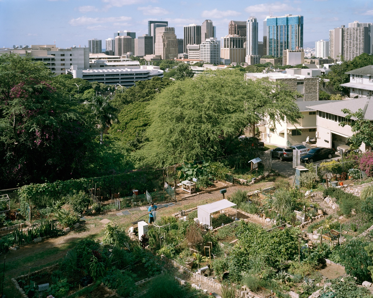 Community Garden, Hawaii 2014