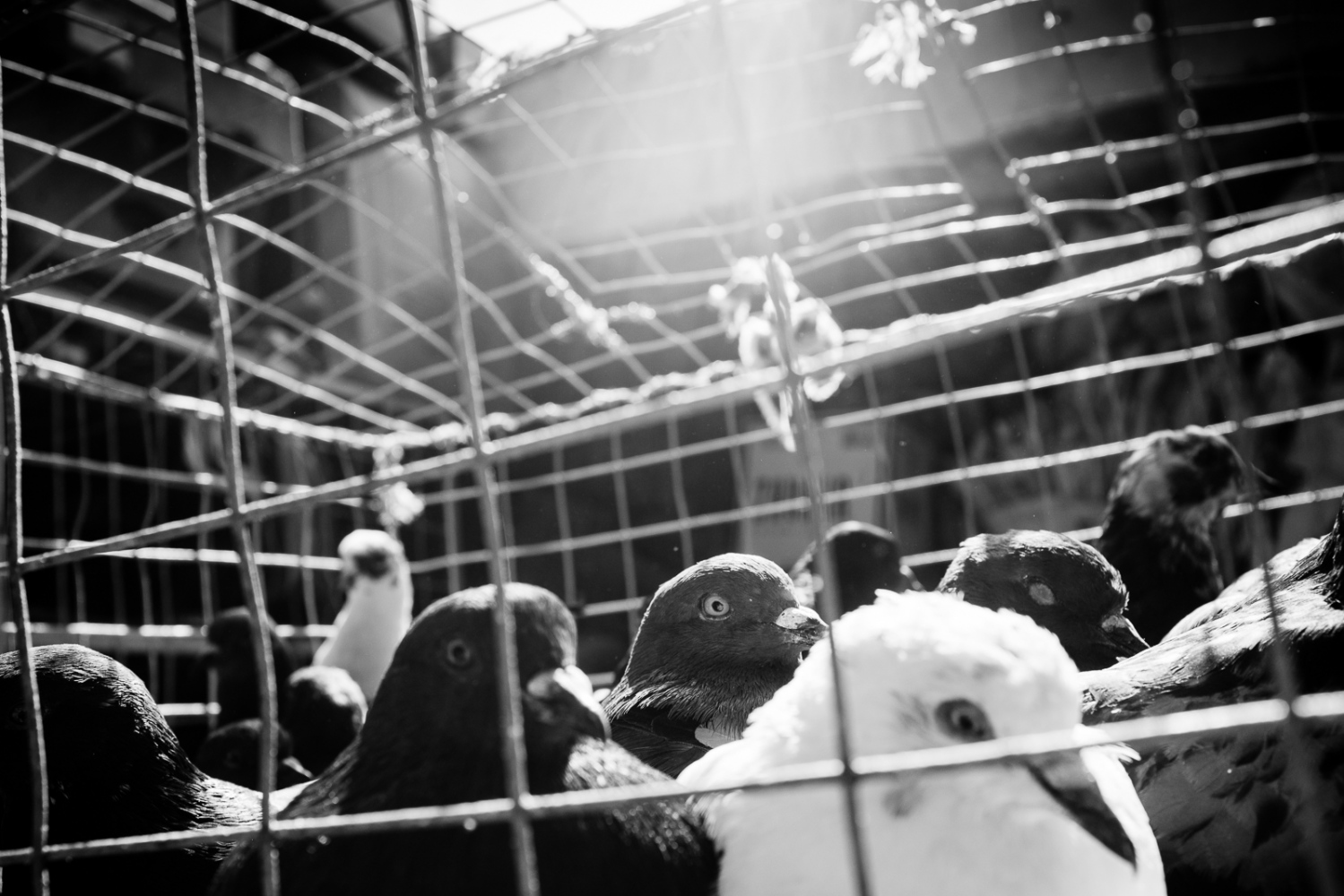 Art and Documentary Photography - Loading guerra_mercado_35.jpg