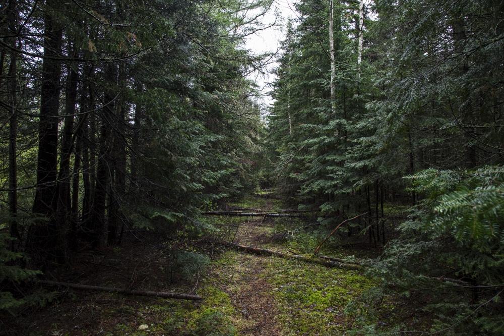 Photography image - Loading Maine02.jpg