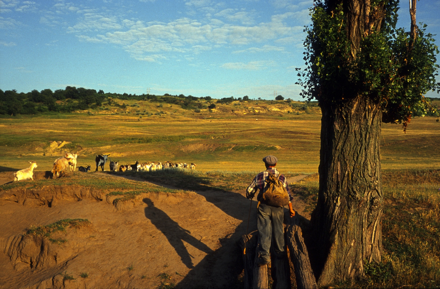 A shepherd takes his flock into the hills to graze in central Moldova.