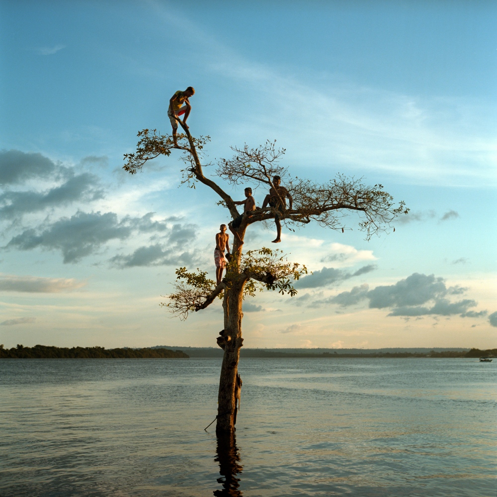 March 29, 2014. A group of boys climb a tree on the Xingu River by the city of Altamira, Brazil. One third of the city will be permanently flooded by the nearby Belo Monte Dam.