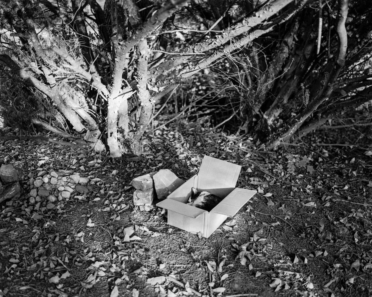 Art and Documentary Photography - Loading SebastianCollett_03.jpg