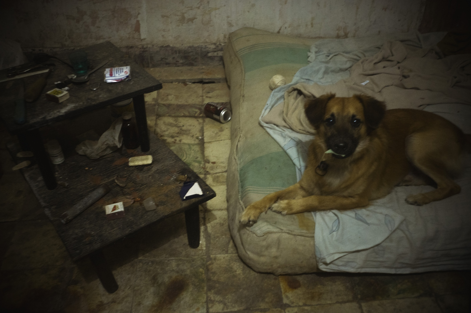 Oscito, the family dog, plays on Ariam's great uncle's bed – Carlos.