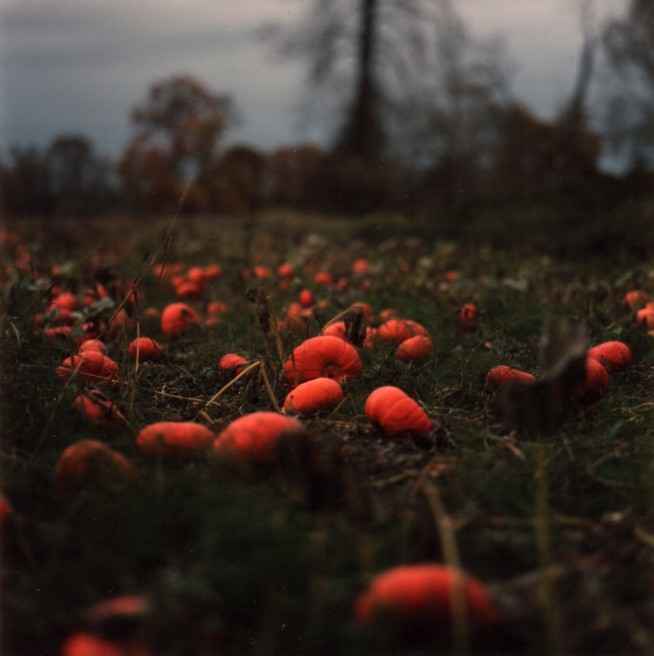Art and Documentary Photography - Loading 8of20-davidson-pumkins.jpg